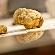 Il prezzo del tartufo bianco: quanto deve costare e come evitare le truffe