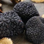 Tartufo: il fungo ipogeo dove e come cresce
